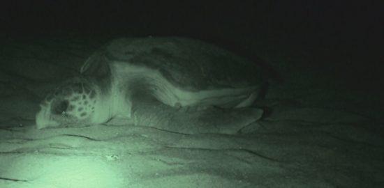 海と日本PROJECTin鹿児島!「#6 鹿児島県ウミガメ研究会」