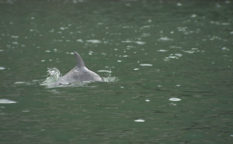 海と日本PROJECTin鹿児島!「 #11 海と人をつなぐ~かごしま水族館のイルカ調査~」