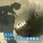 屋久島町永田集落いなか浜