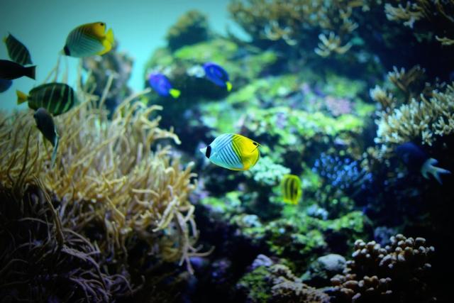 笠沙の海の魚たち大展示会~笠沙の海の多様な生物たち~