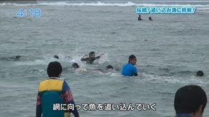 """奄美市名瀬で行われる島伝統の漁法""""伝統の「追い込み漁」""""とは?"""