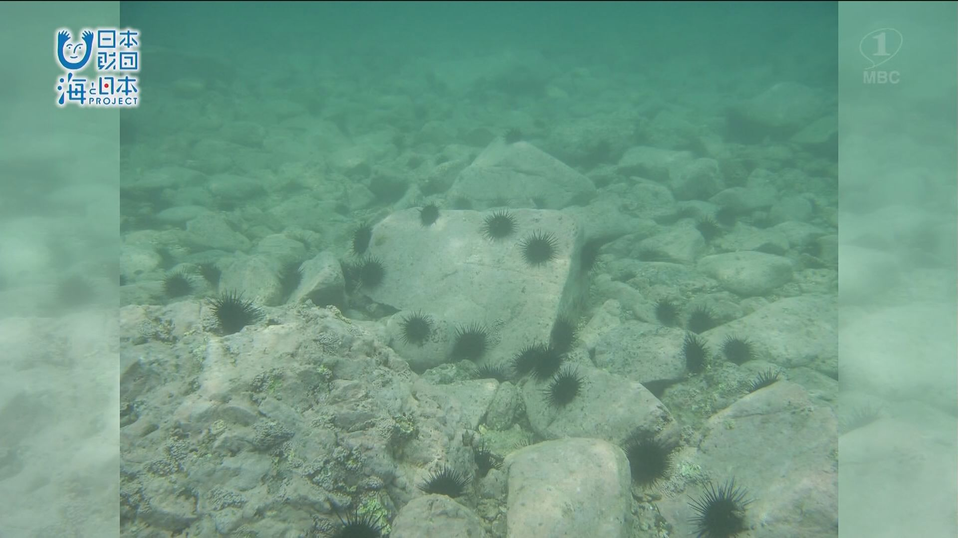 深刻な環境問題「阿久根のウニ」の生息する海を守る取り組み