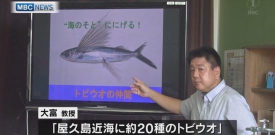 専門家が出前授業「屋久島」海や川の生き物を学ぶ