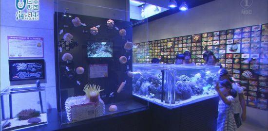 野生のサンゴの研究。小さな水槽が大きな海へとつながっていく!かごしま水族館