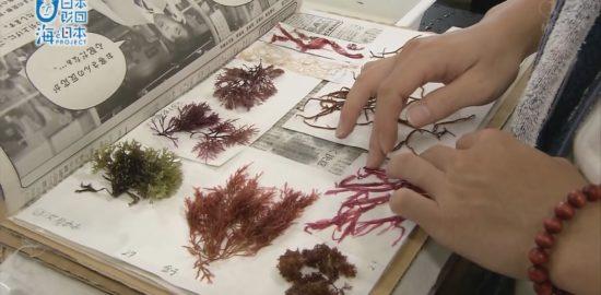 鹿児島の海に生息する海藻を使って子ども達が図鑑づくり!