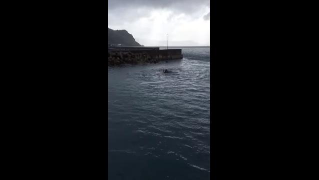 【MBCスクープ投稿】イルカの群れに出会いました!