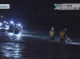 鹿児島県、シラスウナギ漁解禁!