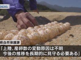 鹿児島県内のウミガメ上陸・産卵 過去15年間で最低