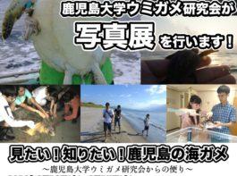 「見たい!知りたい!鹿児島の海ガメ」2/19(火)開催