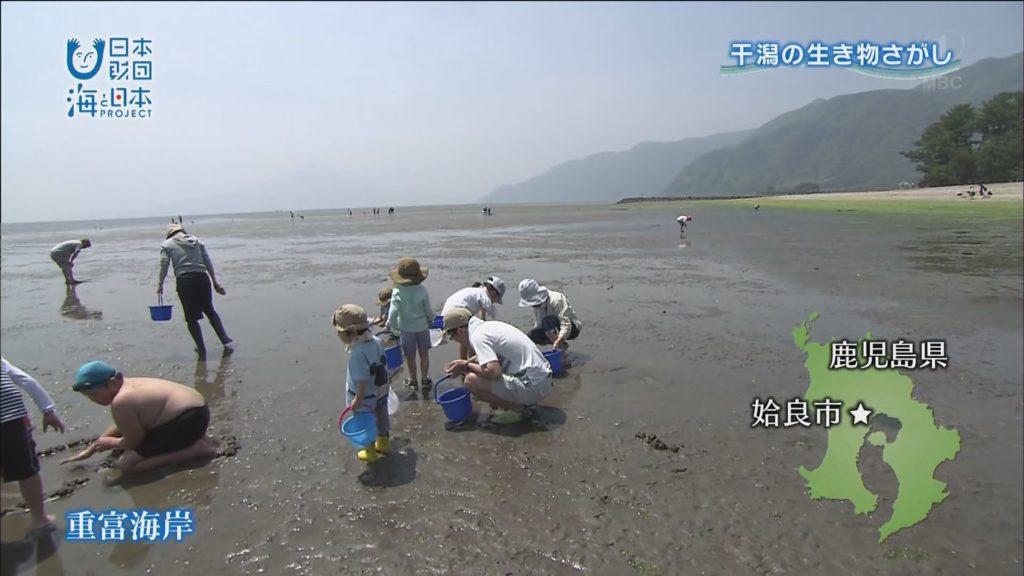 鹿児島湾:姶良市重富海岸で干潟の生き物さがし!