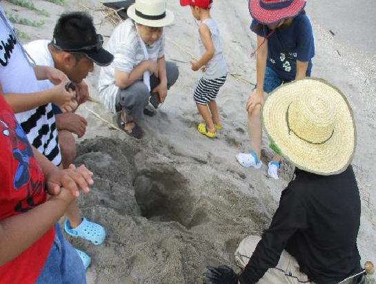 【吹上浜】7/28(日)「ウミガメ産卵跡観察会」開催!