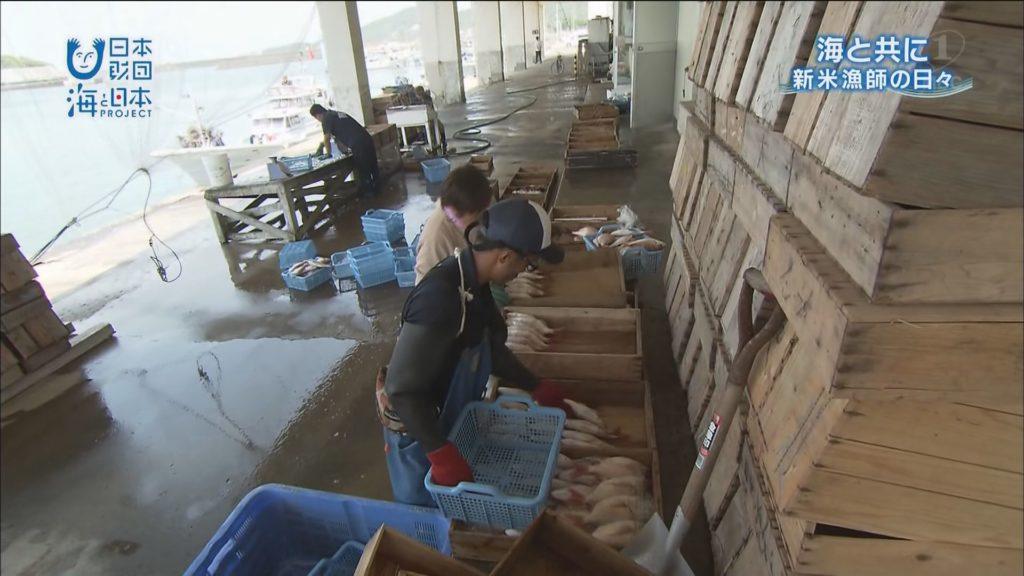 【かごしま4】転職して漁師に海と共に生きる