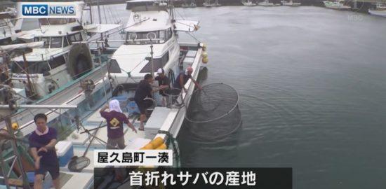 屋久島でサバの豊漁祈願