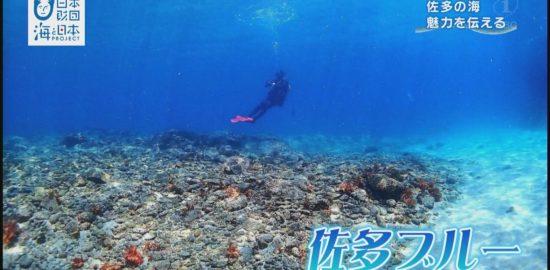 あなたも『佐多ブルー』のリピーターになるかも?佐多の海の魅力を伝える!