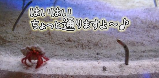 【おうちで水族館】『はいはいちょっと通りますよ〜♫』いおワールド かごしま水族館×海と日本PROJECT in 鹿児島