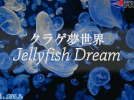 【おうちで水族館】『JellyfishDream~クラゲ夢世界~』いおワールド かごしま水族館×海と日本PROJECT in 鹿児島
