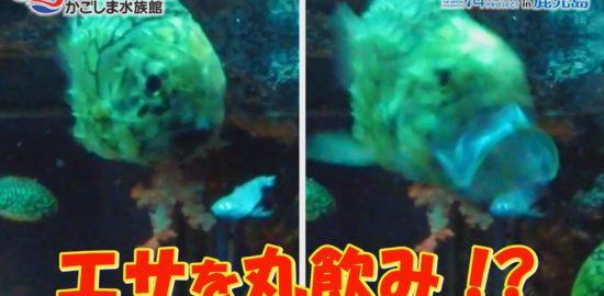 【おうちで水族館】『おさかな達の食事の時間』いおワールド かごしま水族館×海と日本PROJECT in 鹿児島