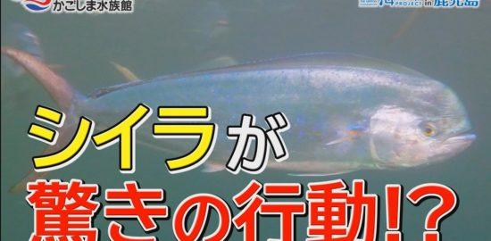 【おうちで水族館】『イルカ水路でジャンプしているのは…』いおワールド かごしま水族館×海と日本PROJECT in 鹿児島